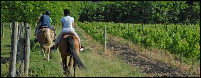 vinyard_summer3
